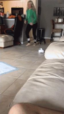 Cute Animal gif, The Shirk Report – Volume 415 «TwistedSifter