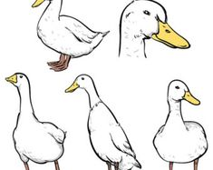 ///// OFF Sale Duck isolated vector ///// Duck isolated vector clipart… Bird Drawings, Easy Drawings, Animal Drawings, Animal Sketches, Drawing Sketches, Duck Tattoos, Duck Illustration, Duck Drawing, Sketch Style