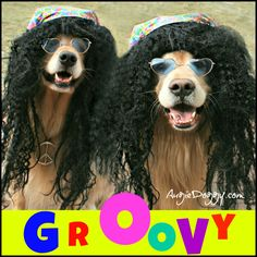 groovy dogs - Google Search