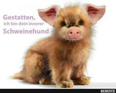 Eine von 14329 Dateien in de… funny picture & # allow.jpg & # from MatteMax. One of 14329 files in the category & # funny pictures & # on FUNPOT. Animals And Pets, Baby Animals, Funny Animals, Cute Animals, Funny Shit, Funny Cute, Funny Jokes, Facebook Humor, Cool Pictures
