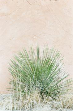 . Santa Fe Trail, Desert Rose, Fes, Wedding Blog, Deserts, Bride, Cactus, Style, Wedding Bride