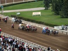 Attend Calgary Stampede, Canada - Bucket List Dream from TripBucket