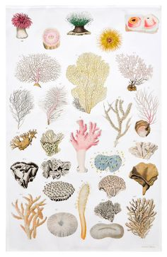 Sea Anemone Tea Towel Botanical Art, Botanical Illustration, Illustration Art, Sea Life Art, Sea Art, Sea Anemone, No Bad Days, Ocean Creatures, Watercolor Art