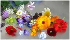 Edible Flowers Part 9 Mahoe Moringa Pineapple Sage Plum Hawthorn Cattail Healing Herbs, Medicinal Plants, Eatable Flowers, Pineapple Sage, Container Vegetables, Romantic Table, Parts Of A Flower, Flower Food, Wild Edibles