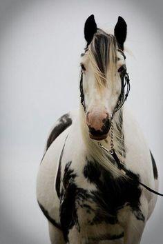 A striking creature...