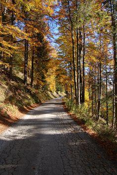 Podzimni variace