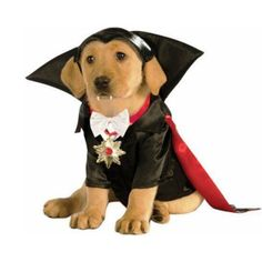 Grab your Discounted Count Dracula Dog Costume while the store launch DISCOUNT is on. Once we reach 300-unit sales, we will be increasing the price back up to  $. This is absolutely a great gift! ORDER NOW because these are FLYING off our shelves!   Condition: New with tags  Theme: vampire, Halloween  Gender: Male  Headpiece Shirt with attached medallion Detachable cape   THIS PRODUCT IS A LIMITED PRODUCTION AND IS NOT AVAILABLE IN STORES. WILL SELL OUT FAST! Click ADD TO CART  to Order… Pet Halloween Costumes, Pet Costumes, Dog Halloween, Halloween Fancy Dress, Superman Halloween, Trendy Halloween, Halloween 2015, Halloween Cosplay, Halloween Night