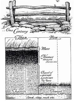 Soil health and composition Woodworking Images, Garden Soil, Gardening, Top Soil, Outdoor Landscaping, Permaculture, Garden Planning, Bushcraft, Farm Life