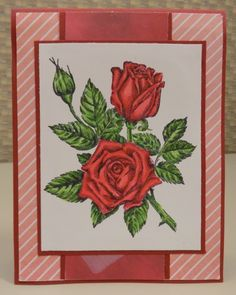 HYCCT1531A Roses for You