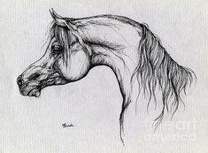 Arabian Horse Drawing 62 (Print) by Angel  Tarantella