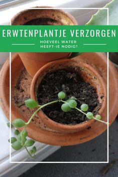 Indoor Garden, Indoor Plants, Home And Garden, Edible Garden, House Plants, Planting Flowers, Green, Diy, Balcony