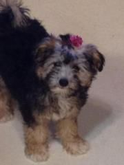 Awe, Nice Hair Clip Beautiful Dogs, Hair Clips, Cool Hairstyles, Chinese, Nice, Animals, Cute Dogs, Hair Rods, Fancy Hairstyles