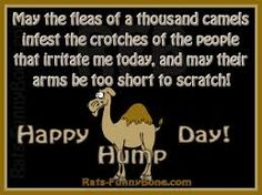 It's  HUMPDAY!!!   hump day camel