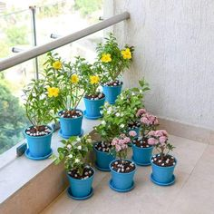 Balcony gardens are a great spot to add some green corners to your loving abode. So why not make it attractive and the best place to enjoy the outdoors? Swipe left to see some great balcony garden plant packs, to make it the major attraction point of your home. Balcony Plants, Balcony Garden, Indoor Plants, Flowering Plants, Foliage Plants, Planting Flowers, Yellow Plants, Pink Plant, Free Plants