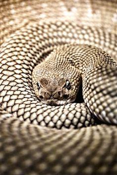 Snake ✿⊱╮