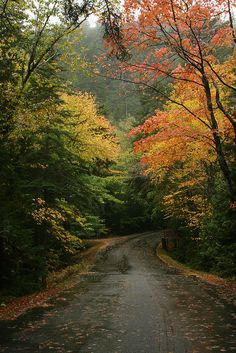 Rainy Autumn Afternoon in Maine  Taken along the road to Echo Lake Beach in Acadia National Park, Maine. By Bill Lepere