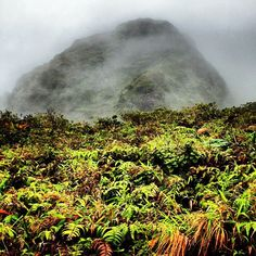 #volcano #tropics #mountain #forest #nature #clumping #hiking #view #island #sky #martinique #incredible #plants #green #rain #mist #backintime #amazing
