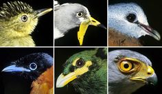 Birds and T-rex share common past - http://scienceblog.com/80635/birds-and-t-rex-share-common-past/