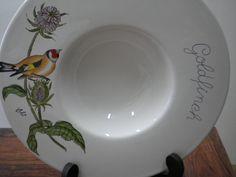 Prato passaro goldfinch