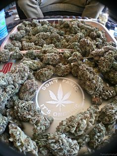 Join this cannabis lovers social network: http://angrybud.com/buzzfeed
