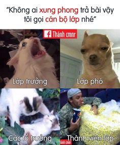 Tom And Jerry, Meme Pics, Funny Memes, Photo Processing, Lol, Conan, School, Alice, Animals