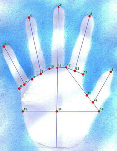 Geometric morphometric landmarks applied to an experimentally produced hand stencil. This shows the 19 geometric landmarks applied to a hand. Emma Nelson, University of Liverpool