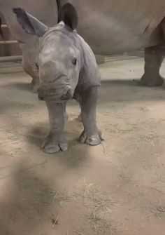 tiere Handsome rhino gets the brushie brushie animals baby animals adorable brushie Handsome rhino Tiere Cute Animal Videos, Funny Animal Pictures, Cute Little Animals, Cute Funny Animals, Baby Rhino, Baby Elephants, Cute Cat Gif, Animal Memes, Animals Beautiful