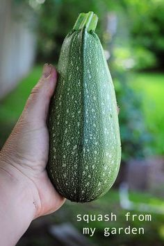 Alternative Gardning: How to Grow Squash