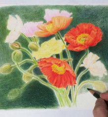 色鉛筆アートの世界-22ページ目