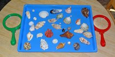Shell activities for kids - ordering, sorting, examining, and experiencing them with all five senses