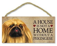 You are Viewing: Pekingese Wood Dog Sign Wall Plaque 5 x 10 + Bonus Coaster. These Made in the USA dog signs are truly high quality. The dog images are hand designed by expert designers and applied to the wood with state of the art machines. Yorkies, Pekingese Puppies, Fu Dog, Wood Dog, Different Dogs, Dog Signs, Bichon Frise, Puppy Love, Puppy Cut