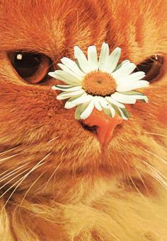 For your delight and delectation this Happy Monday, we bring you Cats and Plants courtesy of Stephen Eichhorn Crazy Cat Lady, Crazy Cats, Cat Plants, Animal Crackers, Cat Boarding, Space Cat, Ginger Cats, Art Inspo, Cats And Kittens