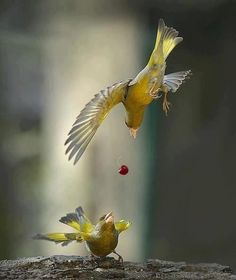 Action photography of birds Pretty Birds, Beautiful Birds, Animals Beautiful, Cute Animals, Beautiful Images, Funny Animals, All Birds, Love Birds, Action Photography