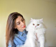 Cat, persian, adorable, yuki