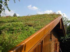 La toiture végétalisée améliore l'isolation de la maison.