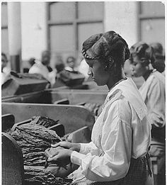 Tobacco plant. Picture of [African-American] woman before work tables covered with tobacco., 01/19/1922