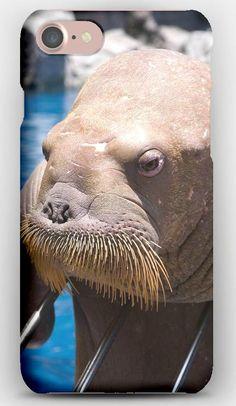 iPhone 7 Case Walrus, Face, Sea, Dweller, Old, Seal