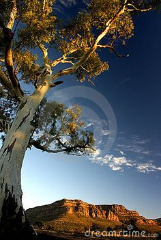 Flinders Ranges National Park, taste a little bit of the outback of Australia. Explore Wilpena Pound, Parachina Gorge and beyond. Australia Honeymoon, Australia Travel, South Australia, Western Australia, Queensland Australia, Melbourne Australia, Wanderlust, Perth, Australia Landscape