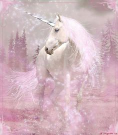 My Unicorn Obsession. For anyone who believes that unicorns DO exist! Unicorn And Fairies, Unicorn Fantasy, Real Unicorn, Unicorn Horse, Unicorns And Mermaids, Unicorn Art, Magical Unicorn, Rainbow Unicorn, Unicorn Images