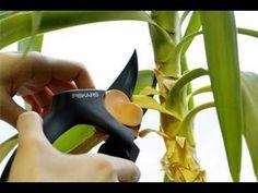 6. Лечение растений. Технология изобилия урожая (по методу Миттлайдера) 3 - YouTube