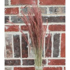 @curiouscountry posted to Instagram: Dried Ruby Red Silk Grass - this uniquely colored grass is a great accent in dried flower bouquets. It's feathery stems will add texture and color to your arrangements.  #driedflowers #driedplants #flowerlovers #homedecor #driedflowerdesign #floraldesign #flowerarrangement #diyhomedecor #diycrafts #flowers #driedgrass #floraldesign