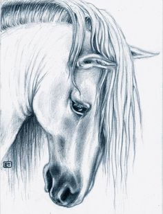 Andalusian Horse portrait by Evey Studios