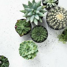 Cacti obsession..... details details... architectural masterpieces in there own right. @indiehomecollective