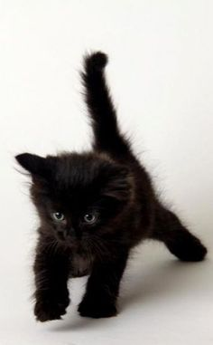 jeune chaton
