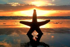 "Sunrise at Cocoa Beach Florida.  Starfish seems to be saying ""Bring it on""!"
