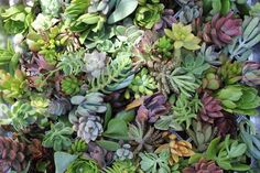 15 succulent perfect for wall gardens wreath and ...
