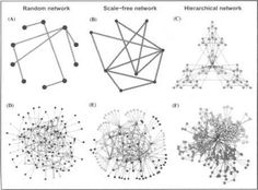 Power Laws in Network Topology - Protein Interaction