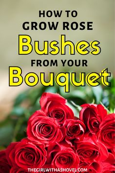 This simple guide will take you step by step on how to properly cut, root and re-plant a rose bush from a bouquet. No more throwing out dying flowers that mean something to you, now you can revisit them again and again!!! Propagate Roses | How to Propagate Roses | How to Grow Roses from Cut Flowers | How to Grow Roses from Cuttings | Propagate Roses in Water | How to Propagate Roses in Water | Cut Flowers, Apartment Plants, Best Indoor Plants, House Plants Decor, Growing Roses, Planting Roses, Rose Bush, Plant Needs