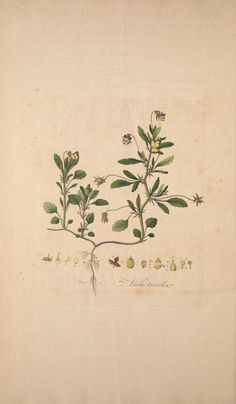 Flora Londinensis, William Curtis