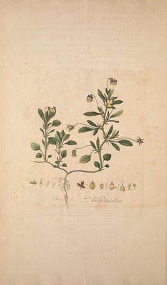 Flora Londinensis, William Curtis